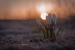 Восход встречает группа.. / весна