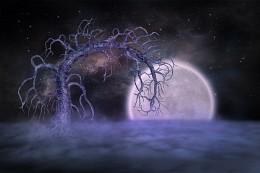 Дерево Неба / Небо фантастический манипуляции сделано с компьютером.