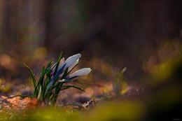 Пробуждение / весна