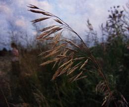 Травы / Макросъемка
