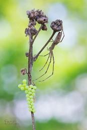 Хозяин виноградника / ---