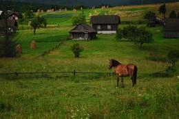кінь / село