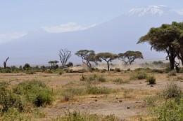Осторожно! Двери закрываются / На сафари у подножия Килиманджаро