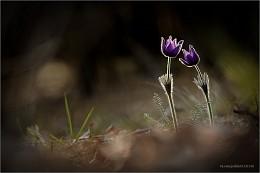 love story / сон трава