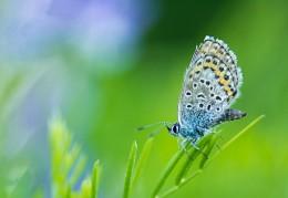 Без названия / бабочка