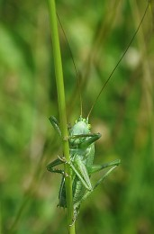 Игра в прятки / в траве сидел кузнечик
