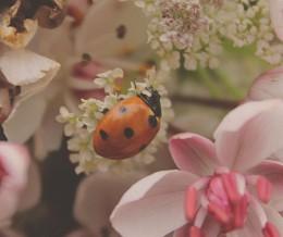 / цветок