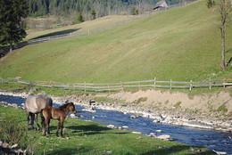 Коні / село