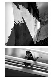 / диптих, тень, бабочка