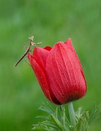 Этюд с цветком / ____