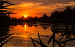 Закат на болоте / Крошечный прудик, почти болото, недалеко от Ростова-на-Дону.