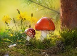 Веснушки от папы, у тебя, сыночек / Мухомор. В старину в сельской местности эти грибы заливали сметаной или молоком и использовали для борьбы с мухами.