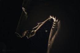 люблю пауков)))))) / #Благовещенский мост, #Санкт-Петербург, #паутина, #ночь, #паук, #Bridge #St. Petersburg #Neva #cobweb , #detail , #spider,#night, #spb — в Санкт-Петербург