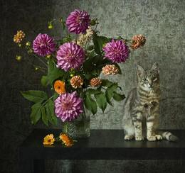 Кот и георгины / Натюрморт