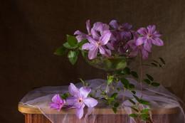 Клематис / Цветы в сентябре.