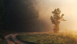 .....Аплодисменты рассвету.... / Только при этом освещении заметил, что деревце на человека похоже :)