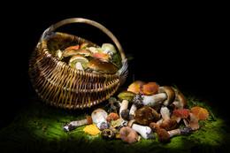 Грибной натюрморт / световая кисть грибы натюрморт
