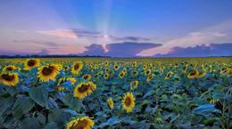 Размышляя о Ван Гоге. Репост. / Снимок сделан летом километрах в 50-ти к северу от Луганска. Таким был удивительным этот летний закат. До войны...