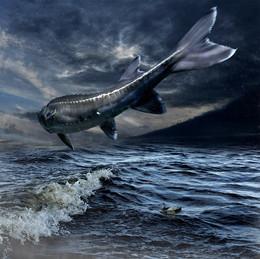 Сны Моря... / Работа сделана из моих фотографий отснятых в разных местах и разное время... Сводилось в PS CC..