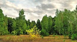 контрасты осени / лес,осень, опушка леса, не солнечная погода
