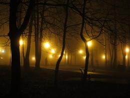 Раннее утро поздней осени / Осенний парк