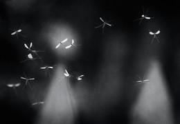 Незолотое сечение / Осенние танцы