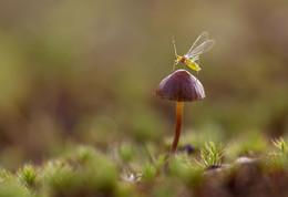 Козявка и гриб / Маленькая тля на поганке