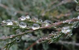 Перед снегом... / Перед снегом шел противный, мелкий, пылеобразный дождь. Но, постепенно, собираясь в капли, образовал такую вот россыпь шариков.....