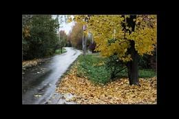 Осенний марафон / Небо плачет осенней порой,  Слёзы - капли, роняя в песок,  Облетает от ветра листвой,  Клён, склонившийся на восток...  Он раздет до гола почти,  И одежда у ног его,  Пожалей его и прости,  Ведь зима всё возьмёт у него...
