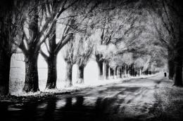Осень. / Осень. Дорога.