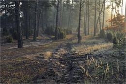 Солнечный туман / Осеннее утро в лесу