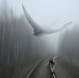 Туманные встречи... / Работа сделана из моих фотографий отснятых в разных местах и разное время... Сводилось в PS CC..