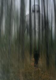 Встречи в лесу... / Работа сделана из моих фотографий отснятых в разных местах и разное время... Сводилось в PS CC..