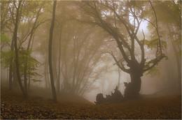 Сюжеты с Демерджи .... / Крым, горы, осень