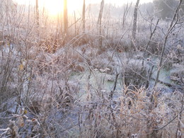 Утро на болоте / Ноябрь