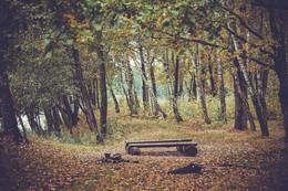 / скамейка в лесу