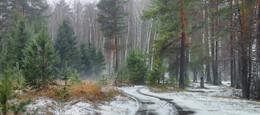 Декабрьская оттепель / Близ озера Саврасово
