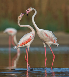 Без названия / Розовые фламинго