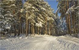 Дорога в сказку / прогулка в лесу