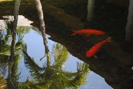 *рибки** / відображення