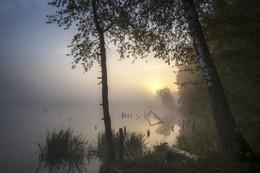 Рассвет,туман / Мистическое утро...