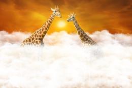 Встреча над облаками / Манипуляция рандеву двух жирафов выше облаков