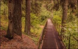 муравьиный мост / мосток в лесу