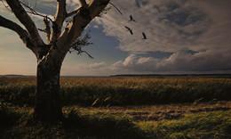 """Без названия / Die Natur auf der Insel Usedom, sie gefällt mir einfach gut. Solch eine Abendstimmung zu erleben, das nenn ich """"GLÜCKEGEFÜHL""""."""