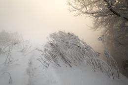 Рассвет,туман,иней.. / Январское туманное утро....