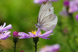 Бабочка :) / Бабочка :)