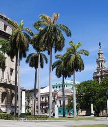 Пальми / Гавана