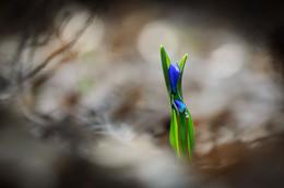 прощание / цветы в лесу