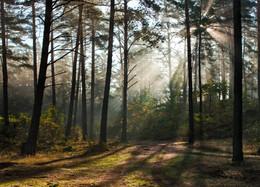 Магия осеннего леса / Осенью в лесу