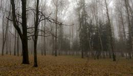 В плену тумана. / ***
